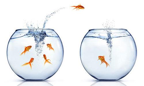 Rybka skáče z jednoho akvária do druhého